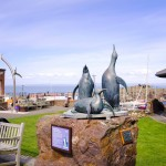 Scottish Seabird centre - North Berwick